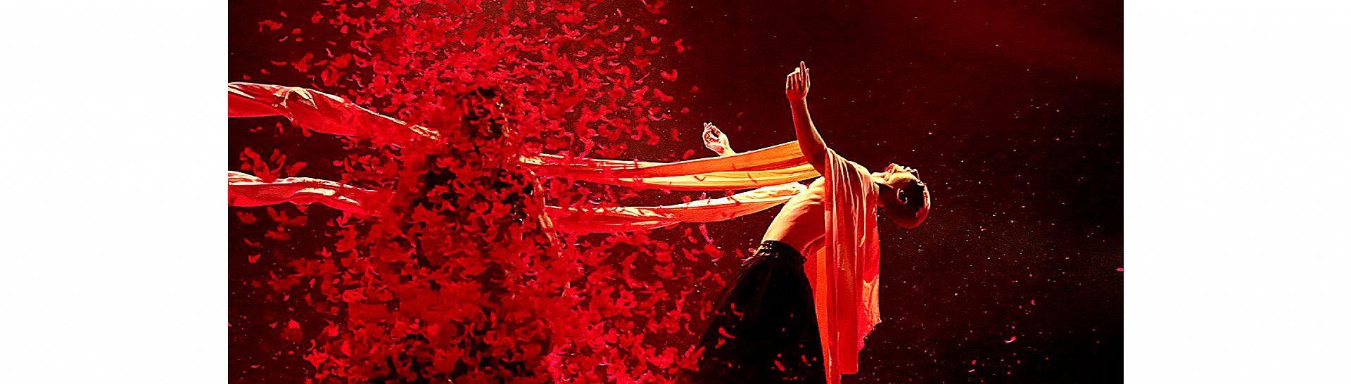 Yang Liping Contemporary Dance01